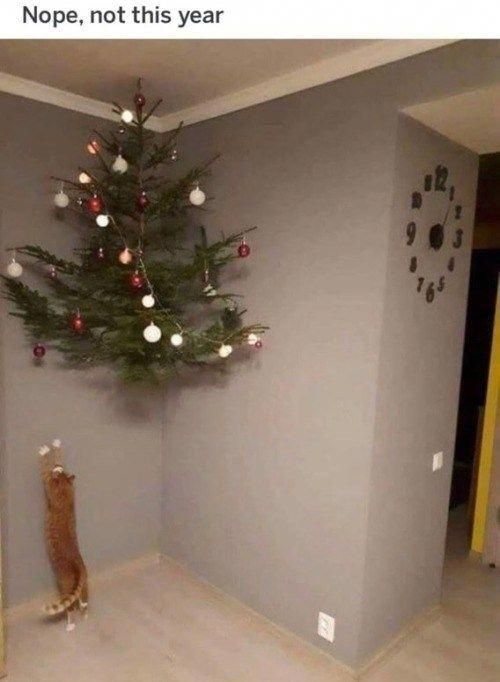 Cats Cat Definitely Jump Up To That When Your Not Lookinglol Funny Christmas Pictures Funny Christmas Tree Christmas Humor
