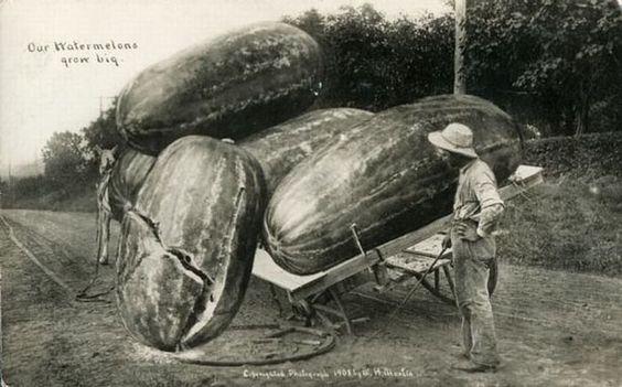 """Unreal postcard"" (beginning of the 20th century)"