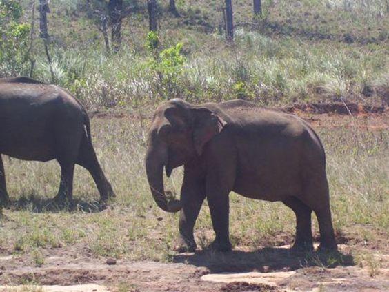 Wildlife Sanctuaries in Goa, India, Forests in Goa, National Parks in Goa, India