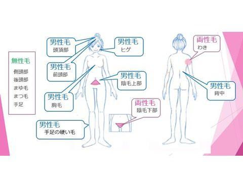 男性ホルモンと女性ホルモンで生える毛の特性
