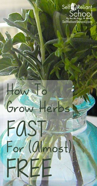 How to grow herbs fast for almost free to grow money and how to make - Practical tips to make money from gardening ...