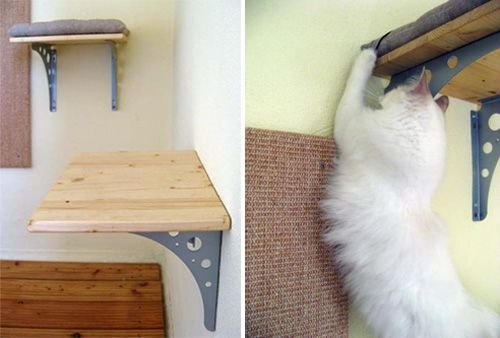 Eva s Custom Cat Shelves with Cushions and Sisal Scratcher Cat shelves, Modern and Toys