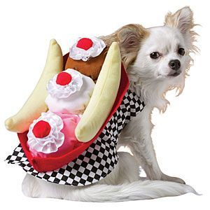 Dogs in Food Costumes | Banana Split Dog Costume