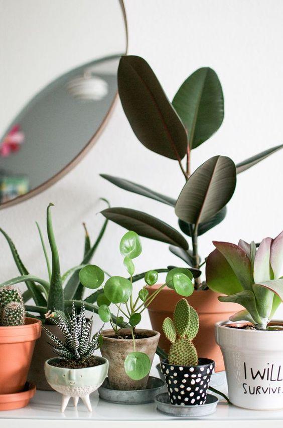 Pots de fleurs et cactus