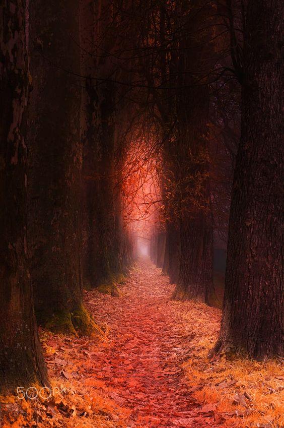 """"""" Pathway to Light """" by Mevludin Sejmenovic on 500px"""