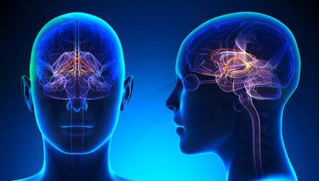 Efeitos da Terapia Cognitivo-Comportamental no Cérebro: Um Estudo:
