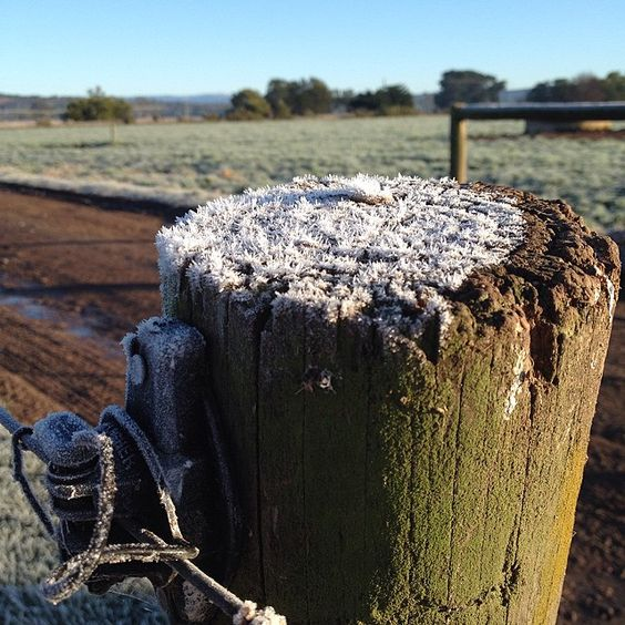#frozen #frost #winter #brrr #prettywhenyourenotinit  by happypoppets
