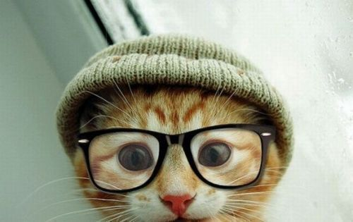 aww cat with hipster glasses