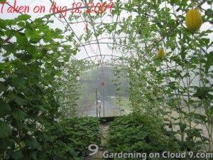 kasvuhoonesse