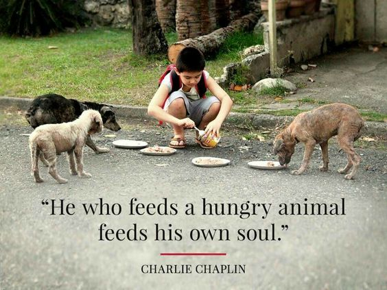 Charlie Chaplin / Animal Quotes: