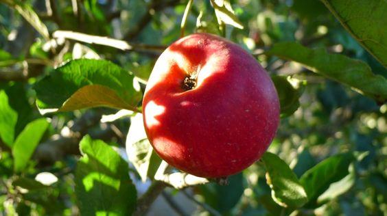 Fall Apple Delight