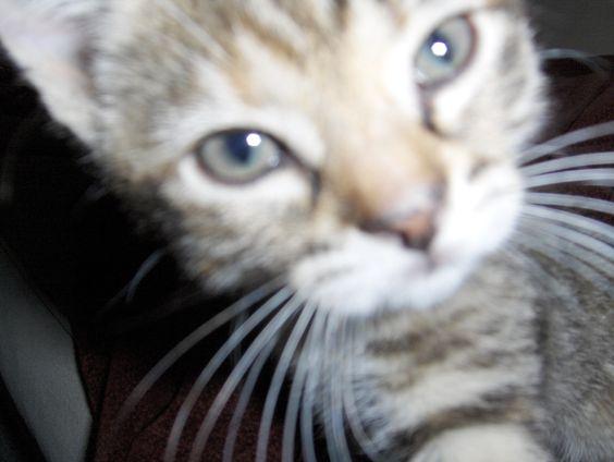 Nanna as a kitten