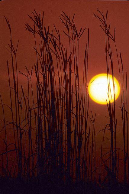 Tallgrass Prairie Sunrise