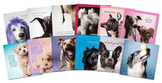 The Dog Studio Greeting Cards
