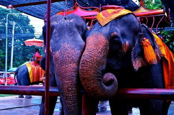 Singburi Elephants