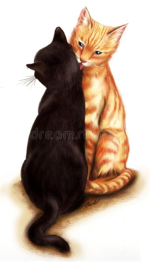 Tender Cats A Couple Of Tender Cats Hand Drawn With Pencils Aff Couple Cats Tender Tender Pencils Ad Cats Cat Stock Cat Stands