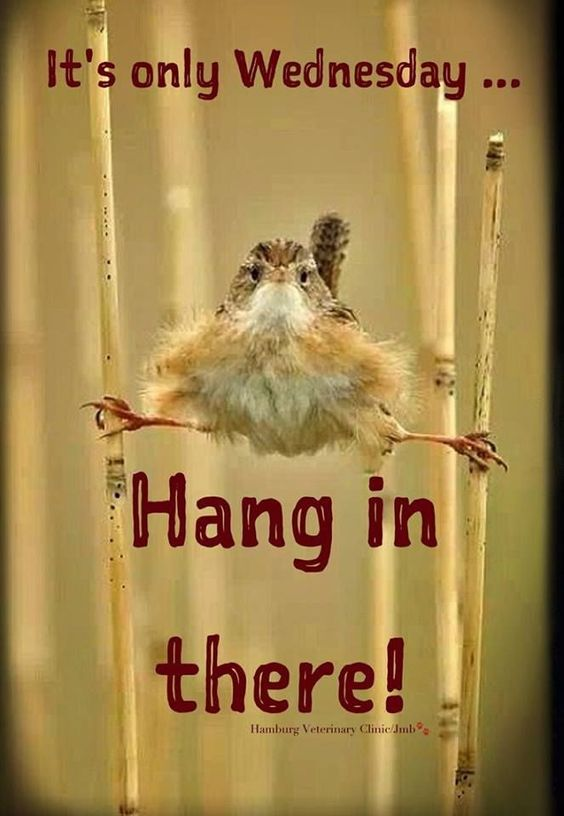 It's only wednesday hang in there