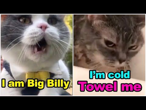 These Cats Can Speak English Better Than Hooman Top 10 Youtube Funny Cat Videos Cat Talk Animals Funny Cats