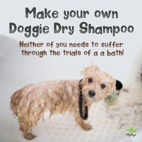 Make Your Own Dry Dog Shampoo In 2020 Dry Dog Shampoo Dog Shampoo Pet Food Storage