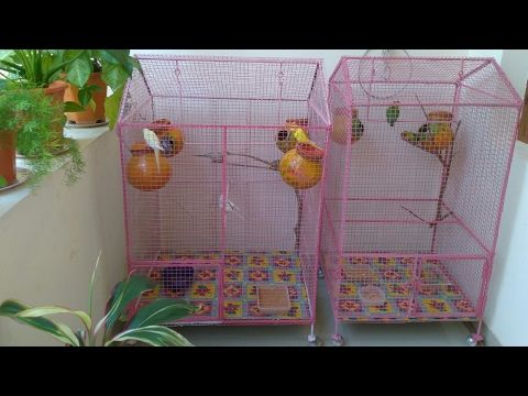 How To Make Decorate A Colourful Love Birds Cage Youtube Bird Cage Bird Cage Decor Love Birds