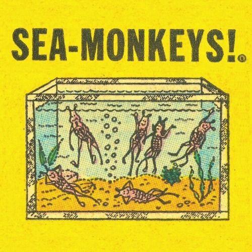 Artemia Salina Sea Monkeys Comic Books Illustration