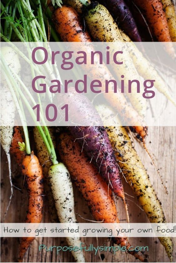 Organic Gardening 101: How to Get Started Growing Your Own Food! #Vegetablegardenbasics