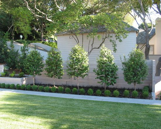 Garden Ideas Along Fence Line surprising good trees for privacy with handsome photograph