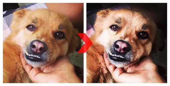 Tratamento de Imagem   #photoshop #dog #cute