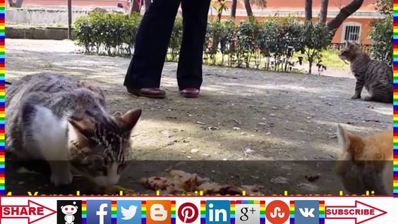 funny cat videos that will make you laugh so hard you cry