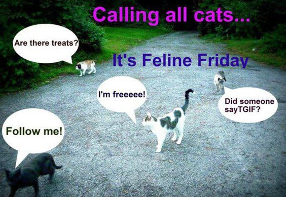 Calling all cats...It's Feline Friday