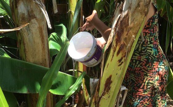 Avoiding Water Waste in the Dry Season