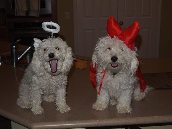 Pin for Later: Your Comprehensive Guide to Dog and Cat Halloween Costumes Angel and Devil
