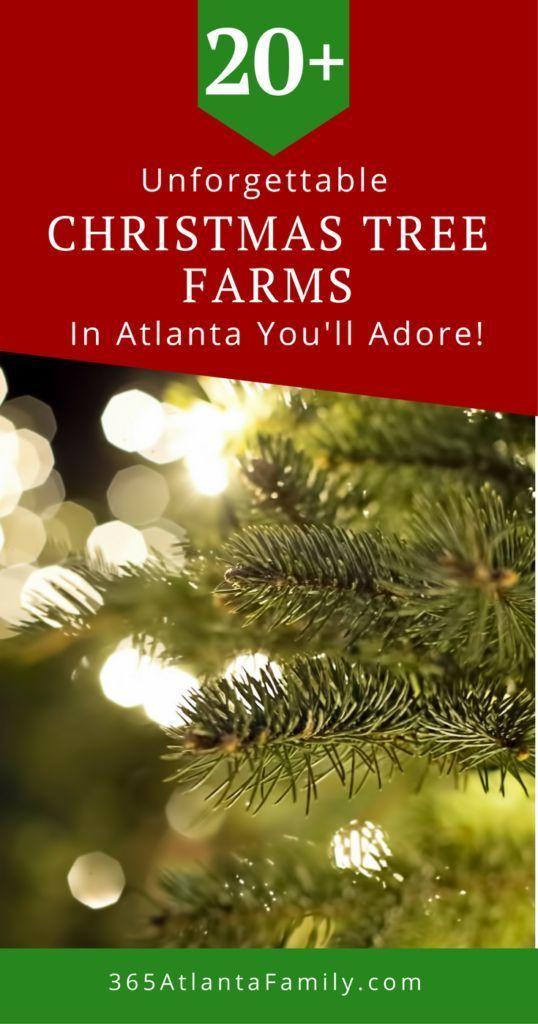 20 Unforgettable Christmas Tree Farms In Atlanta You Ll Adore 2019 Christmas Tree Farm