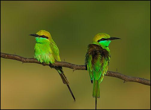 <3 love birds