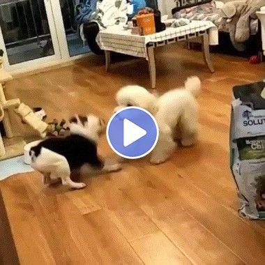 Cachorros ensaiando uma dança