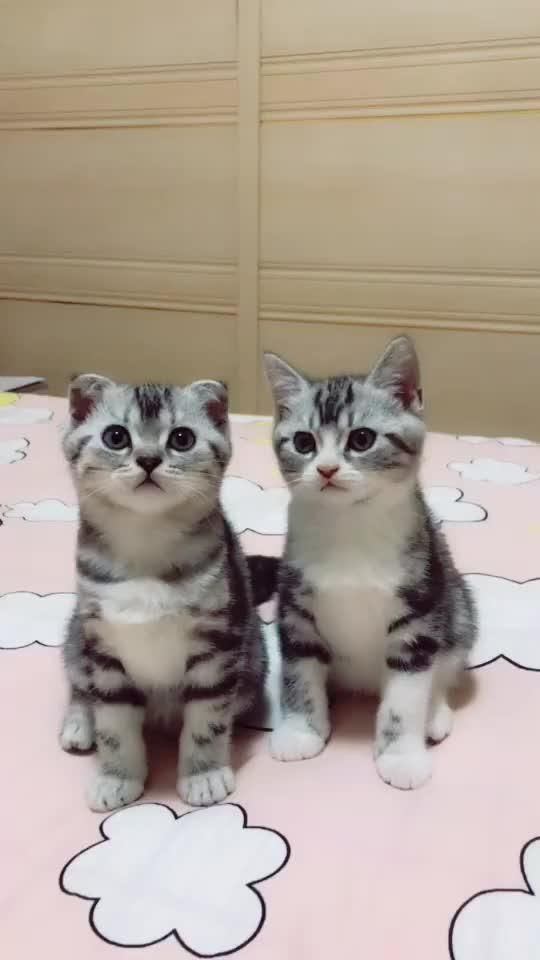 木下ユリ Tiktok Global Video Community Gatos Y Perros Lindos Animales Graciosos Animales Adorables