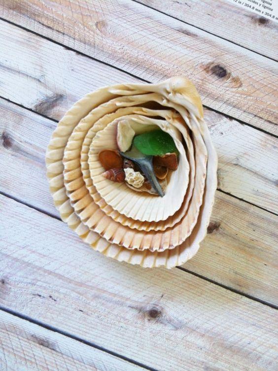4 Orange  Nesting Cockle Sea Shells with Tiny Shells and Green Sea Glass ( 558)
