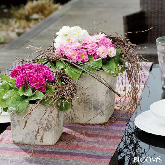 mit primeln k bel bepflanzen gef duo mit birkenzweige knoten garten pinterest. Black Bedroom Furniture Sets. Home Design Ideas