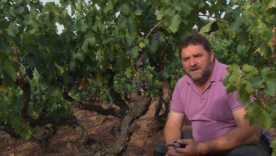 <p>Die Weinlese im Herbst ist für Marian und Juan Carlos Sancha der Höhepunkt des Jahres. Während Juan Carlos in seinem Weinberg und in der Bodega arbeitet, kümmern sich Marian und ihre Schwiegermutter um das leibliche Wohl der Familie. Sie kochen herzhafte Gerichte: z.B. einen deftigen Bohneneintopf, Caparrones a la Riojana.</p>