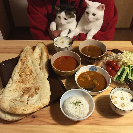mustardtigress:  The amazing dishes and cats of naomiuno.