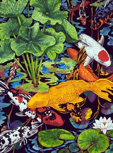 Fancy koi kendahl jan jubb koi beautiful koi pinterest for Fancy koi fish
