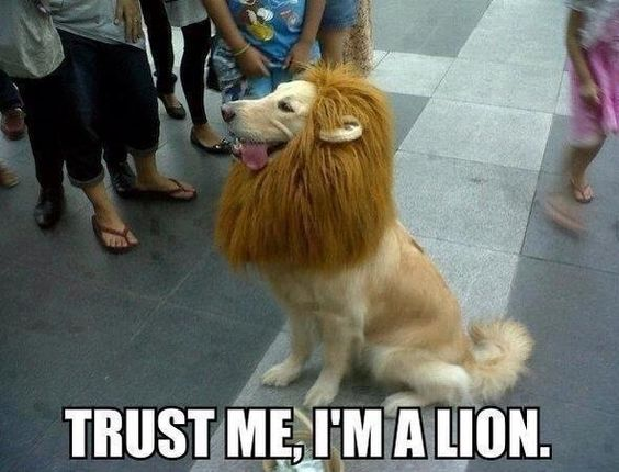 I'm a Lion He may look like a Lion but he might be lieing!!