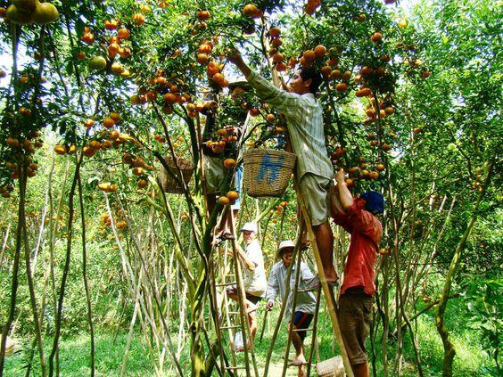 Visit fruit orchards