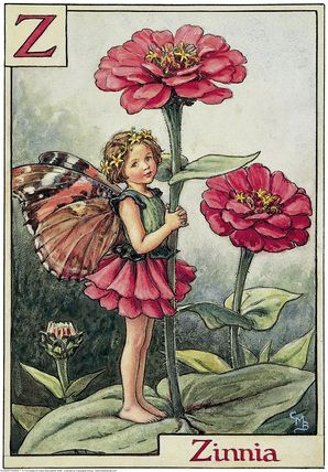 Illustration for the Zinnia Fairy from Flower Fairies of the Alphabet. A small girl fairy stands on a zinnia leaf facing left, holding on to the flower stem.     Author / Illustrator  Cicely Mary Barker