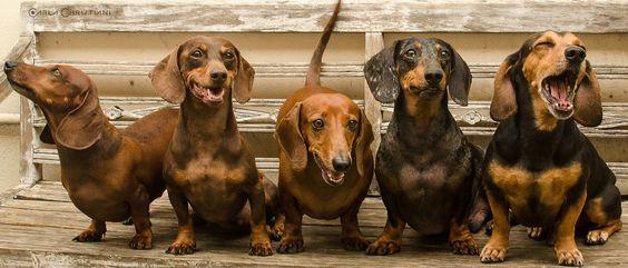 Fotografia Pet - cães www.carlachristiani.com