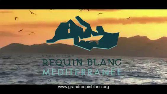 Soutenez le programme Grand Requin Blanc Méditerranée