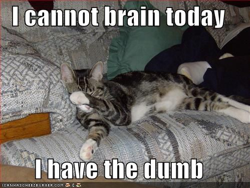 No brain today: Giggle, Kitty Cat, Funny Cats, My Life, Funny Stuff, Monday Morning, Law School, Funny Animal, Brain Today