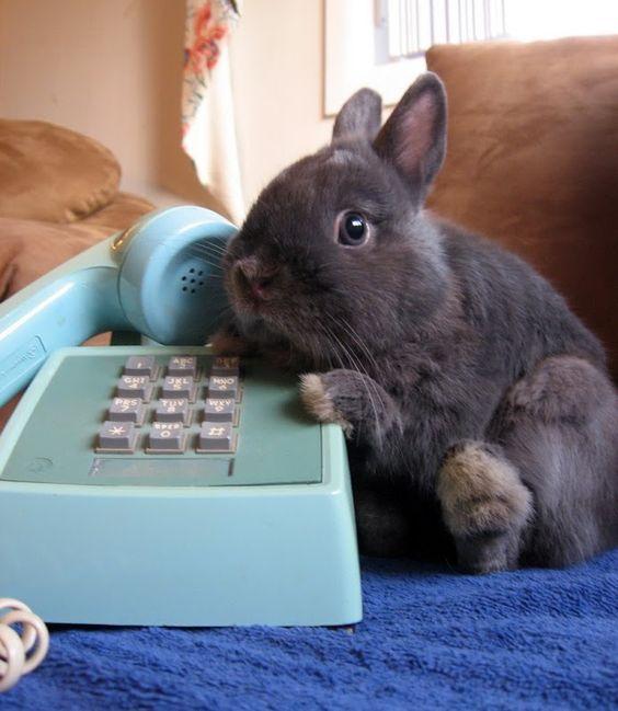 Bunny call the phone.