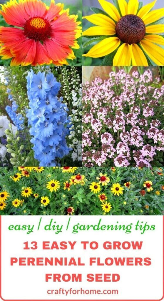 13 Easy To Grow Perennial Flower From Seed Flowers Perennials