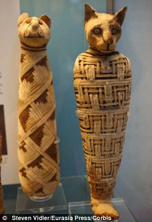Mummie met Egyptische kat heeft 3 staarten en 5 achterpoten